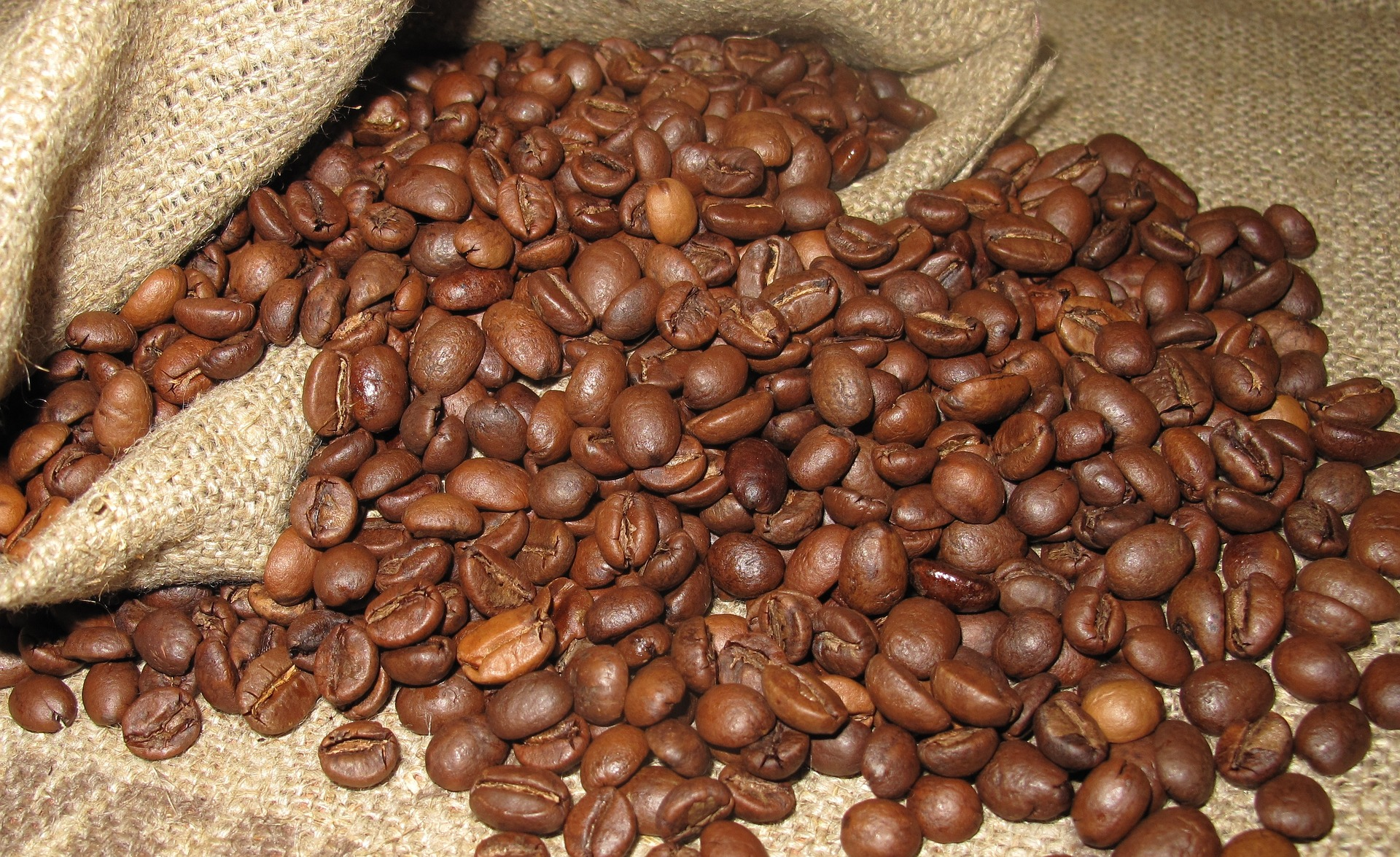 Two types of coffee beans, do you drink Arabica or Robusta ...